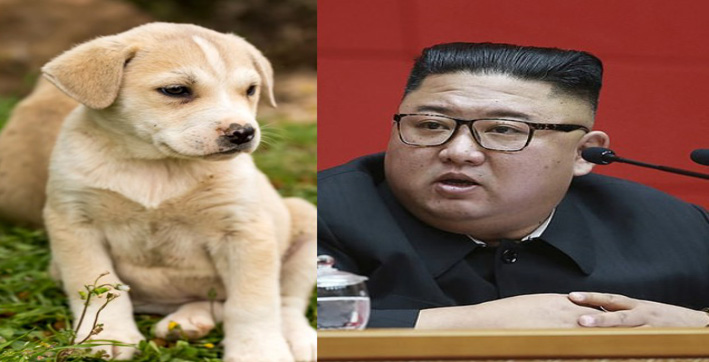 North Korea Kim Jong Un Orders To Give Up Pet Dogs To Save Country From Meat Shortage