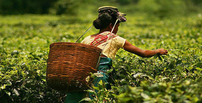 wages of tea workers hiked to rs 217