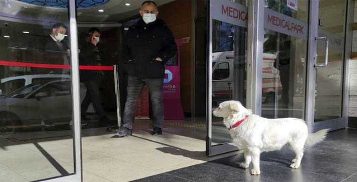 dog spent days outside turkish hospital waiting for owner