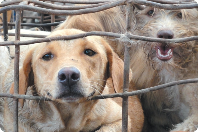 nagaland cabinet bans sale of dog meat in the state