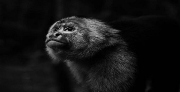 china-reports-first-death-due-to-monkey-b-virus