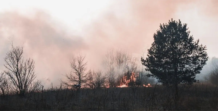 wildfires-are-becoming-a-vicious-problem-across-the-globe